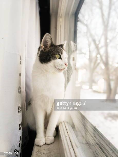close-up of cat sitting outdoors - talia jackson stock pictures, royalty-free photos & images