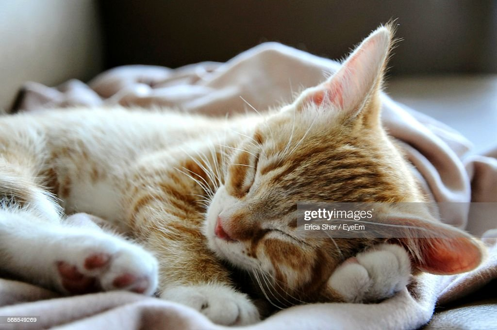 Close-Up Of Cat Sleeping At Home : Stock Photo
