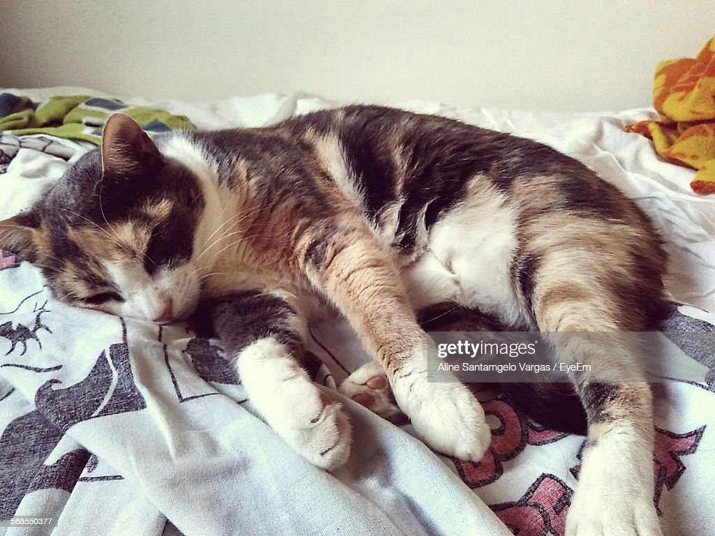 Close-Up Of Cat Sleeping On Bed : Stock Photo