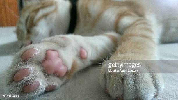 Close-Up Of Cat Sleeping On Floor At Home