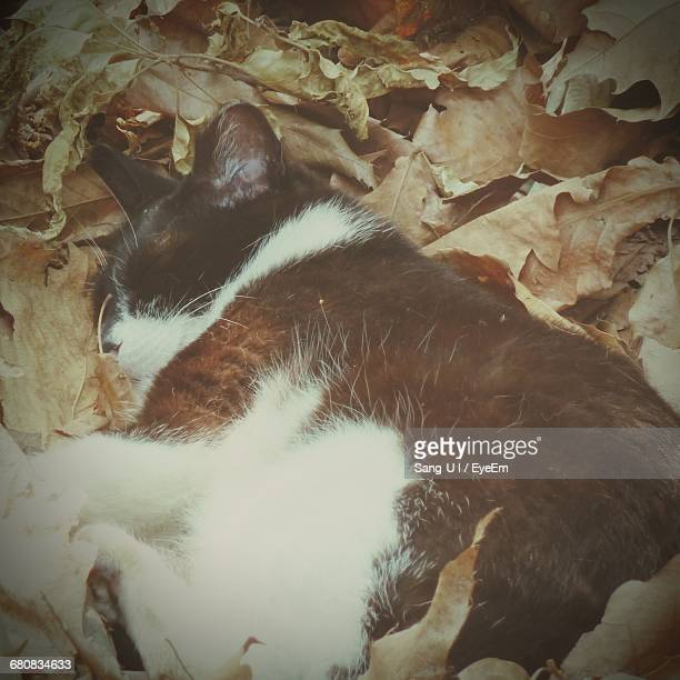 Close-Up Of Cat Sleeping On Leaves Covered Field