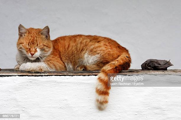 Close-Up Of Cat Sleeping On White Wall