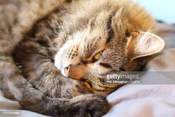 close-up of cat sleeping - cats stock pictures, royalty-free photos & images