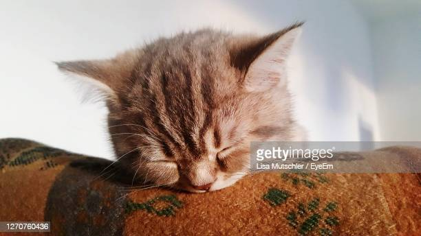 close-up of cat sleeping - tabby stock pictures, royalty-free photos & images