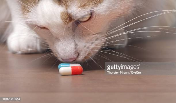 Close-Up Of Cat Smelling Medicines On Table