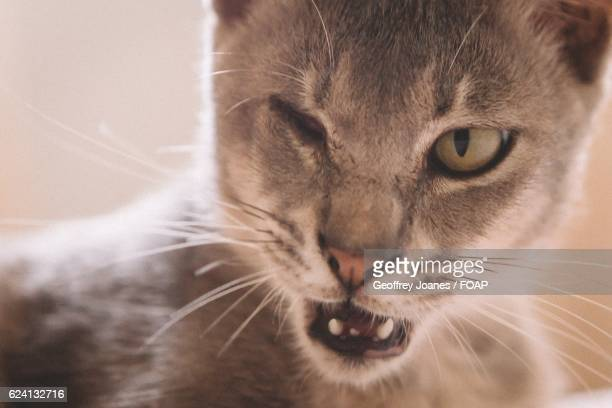 Close-up of cat squinting one eye