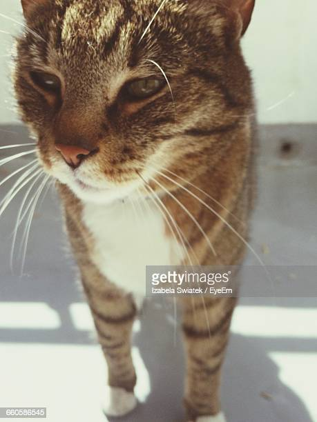 close-up of cat standing on floor during sunny day - swiatek stock pictures, royalty-free photos & images