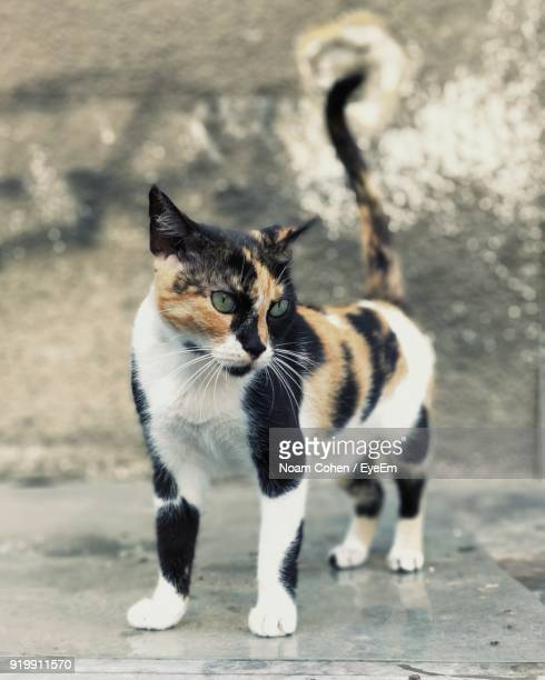 Close-Up Of Cat Standing On Footpath