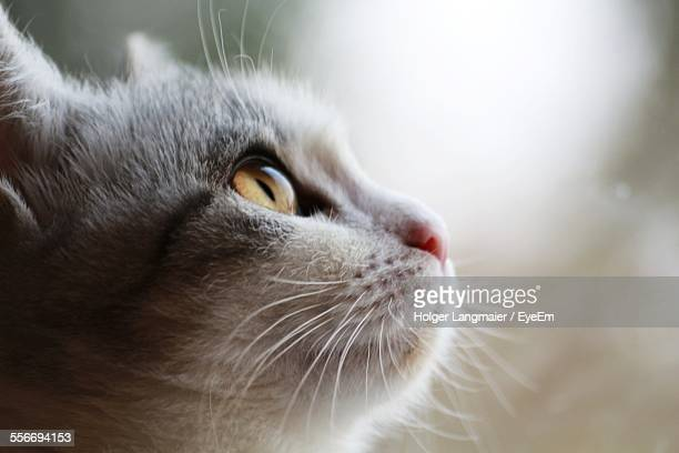 close-up of cat staring - animal whisker stock pictures, royalty-free photos & images