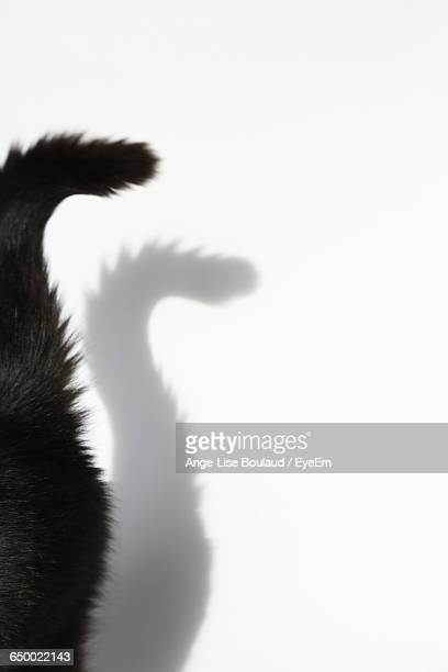 Close-Up Of Cat Tail Against Shadow On White Wall