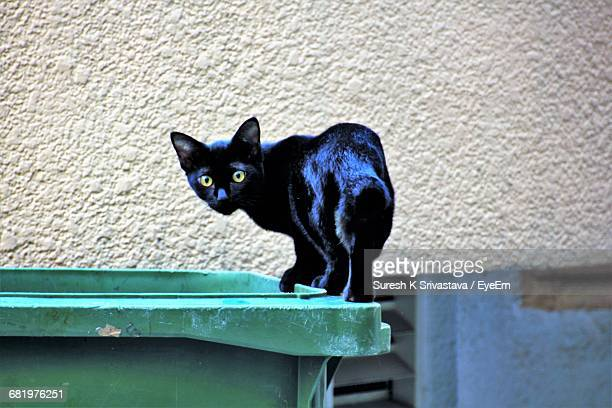 Close-Up Of Cat Walking On Dumpster