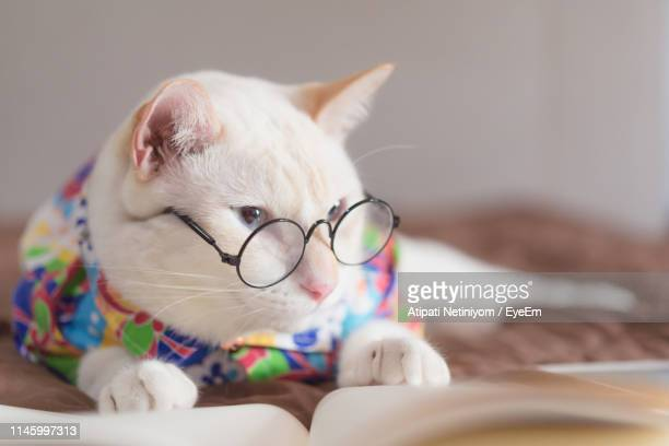 close-up of cat wearing eyeglasses resting at home - pet clothing stock pictures, royalty-free photos & images