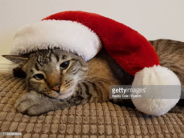 close-up of cat wearing santa hat - cat with red hat stock pictures, royalty-free photos & images