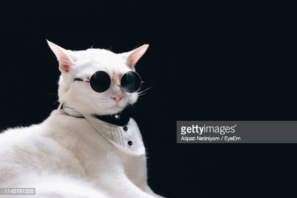 close-up of cat wearing sunglasses while sitting against black background - formal stock pictures, royalty-free photos & images
