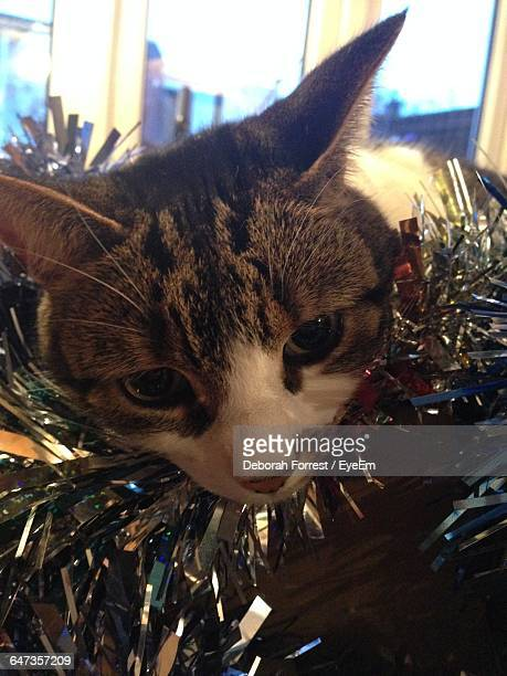 close-up of cat wearing tinsel - widnes stock pictures, royalty-free photos & images