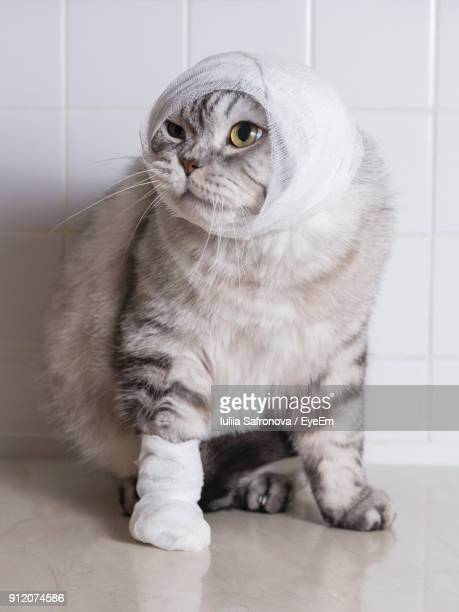 close-up of cat with bandage - bandage stock photos and pictures