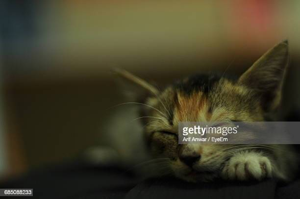 Close-Up Of Cat With Closed Eyes At Home