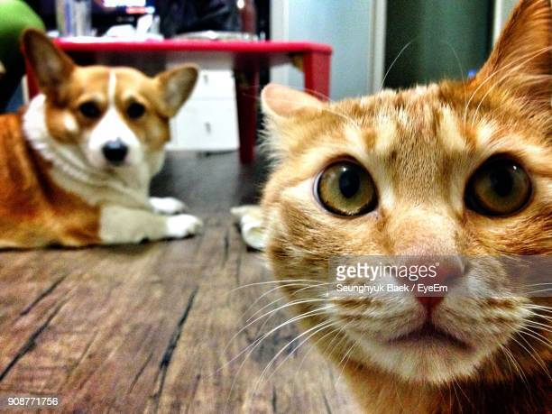 close-up of cat with dog at home - cat and dog stock pictures, royalty-free photos & images