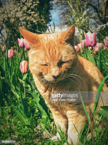 Close-Up Of Cat With Eyes Closed In Lawn