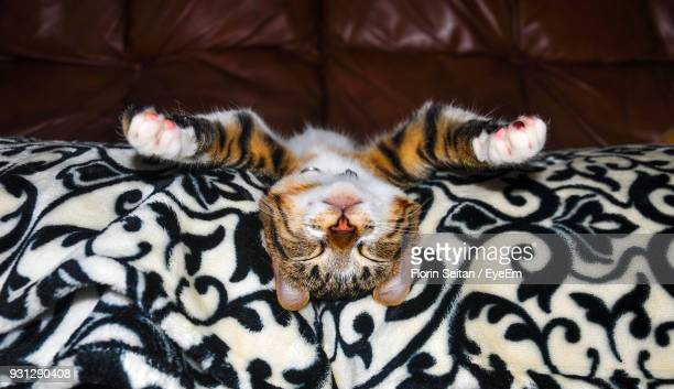 Close-Up Of Cat With Eyes Closed Lying On Sofa