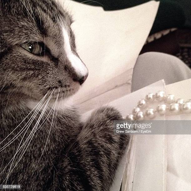 Close-Up Of Cat With Pearl Necklace On Sofa
