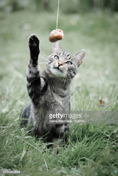 Close-Up Of Cat With Sausage Tied With Rope On Field