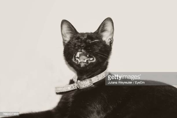 close-up of cat yawning against white background - black siamese cat stock pictures, royalty-free photos & images
