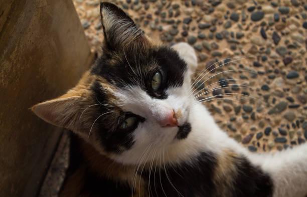 Close-up of cat,Damascus,Syria
