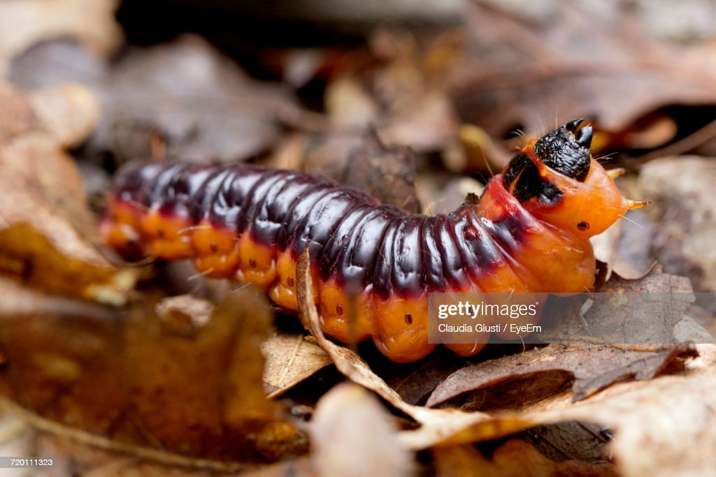 Close-Up Of Caterpillar : Foto stock