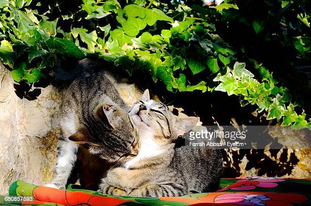 Close-Up Of Cats Against Plants