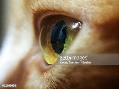 Close-Up Of Cats Eye