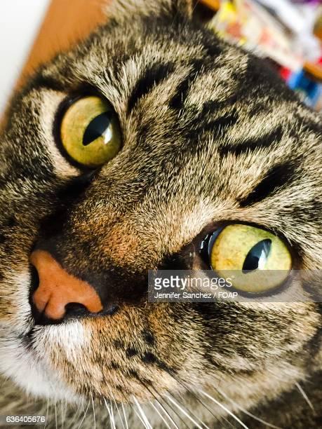 Close-up of cat's head