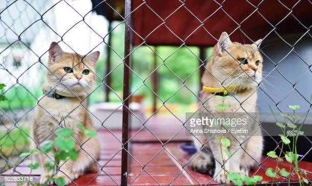 Close-Up Of Cats Looking Away In Cage