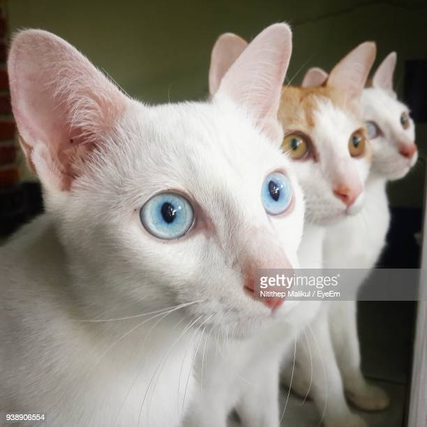 Close-Up Of Cats Looking Away