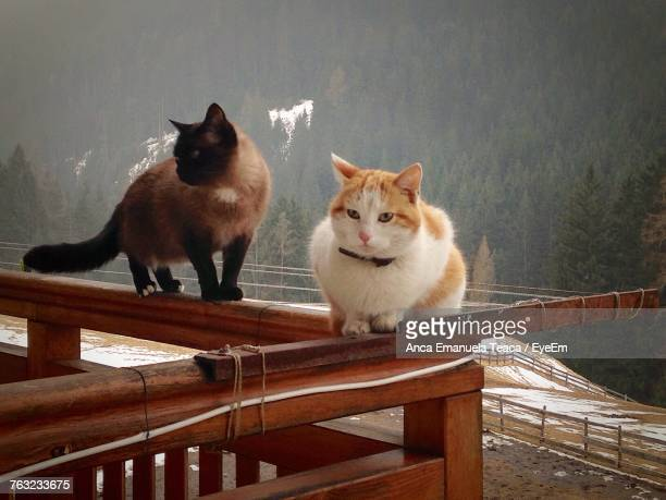 Close-Up Of Cats On Railing Against Trees