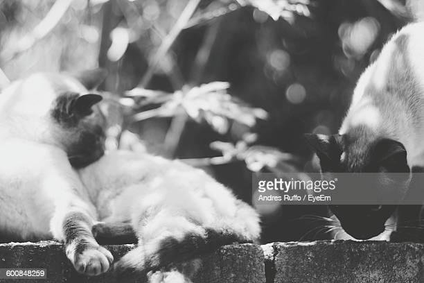 close-up of cats on retaining wall - andres ruffo stock pictures, royalty-free photos & images