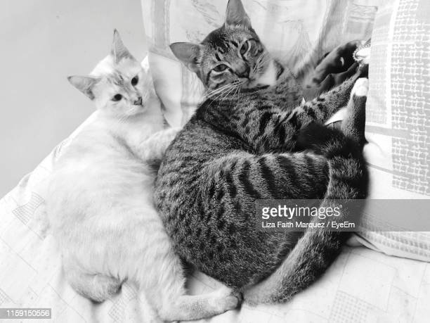 close-up of cats relaxing on bed - liza marquez stock pictures, royalty-free photos & images