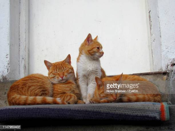 close-up of cats sitting against wall - 三匹 ストックフォトと画像