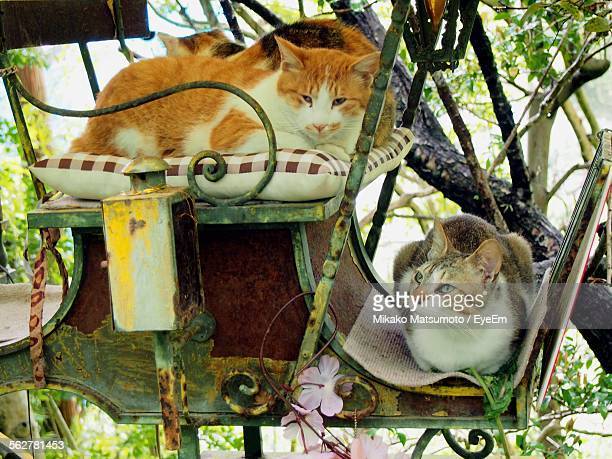 Close-Up Of Cats Sitting In Rickshaw