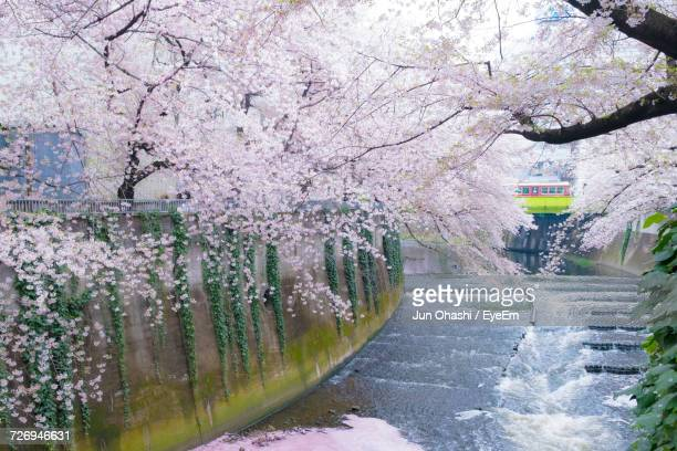 Close-Up Of Cherry Blossom By Road Against Sky
