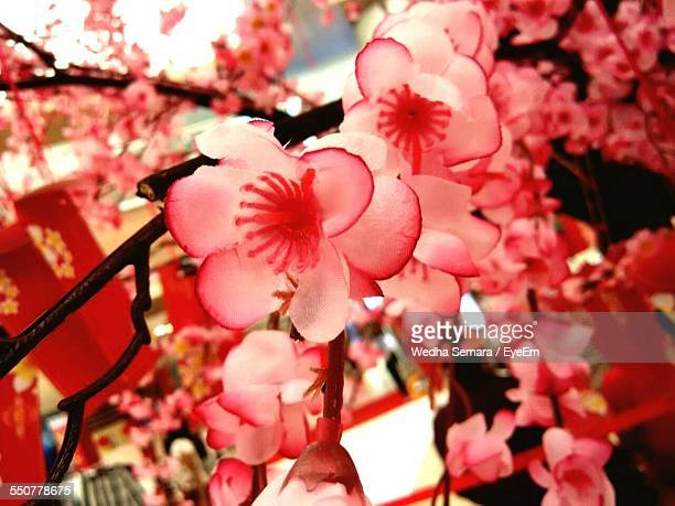 Close-Up Of Cherry Blossoms Indoors