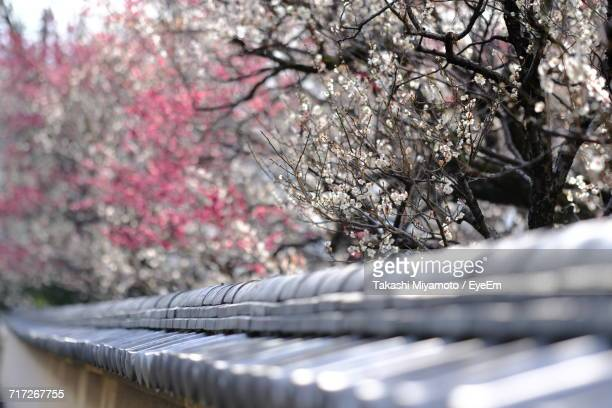 Close-Up Of Cherry Tree During Winter