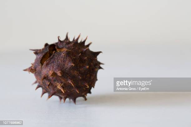 close-up of chestnut over white background - chestnut food stock pictures, royalty-free photos & images