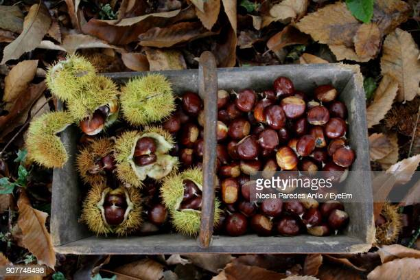 Close-Up Of Chestnuts In Basket On Field