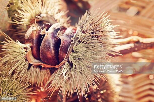 Close-Up Of Chestnuts In Wicker Basket