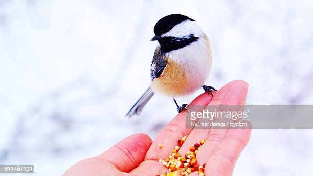 Close-Up Of Chickadee On Cropped Hand With Seed