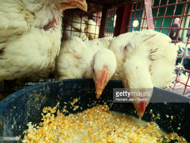 Close-Up Of Chicken Feeding In Cage