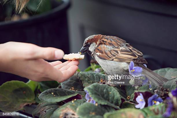 Close-up of child feeding wild bird (sparrow)
