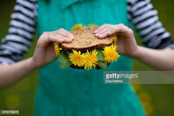 close-up of child holding a dandelion sandwich - feuille de pissenlit photos et images de collection