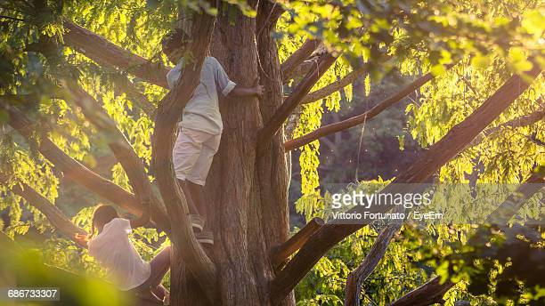 Close-Up Of Children Playing In Tree